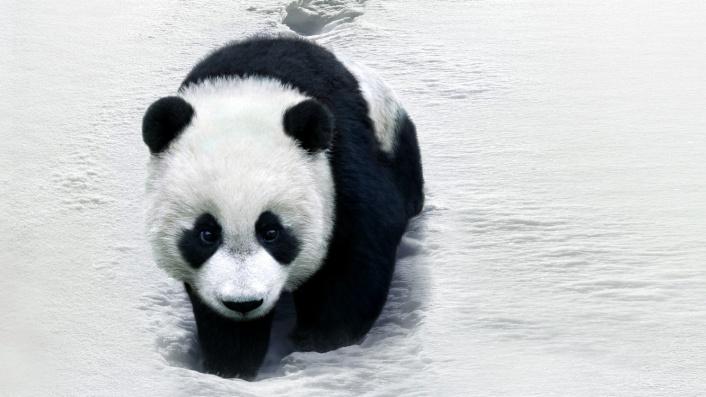Trail of the Panda (Xiong mao hui jia lu)