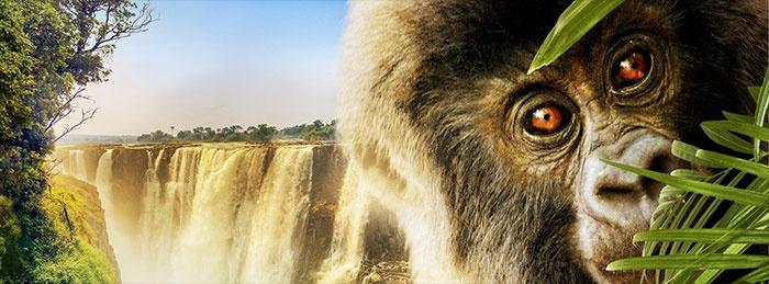 Wild Africa 3D