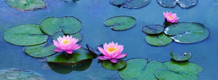 Water Lilies of Monet: the Magic of Water and Light