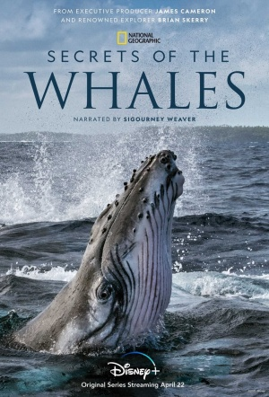 Secrets of the Whales: Season 1