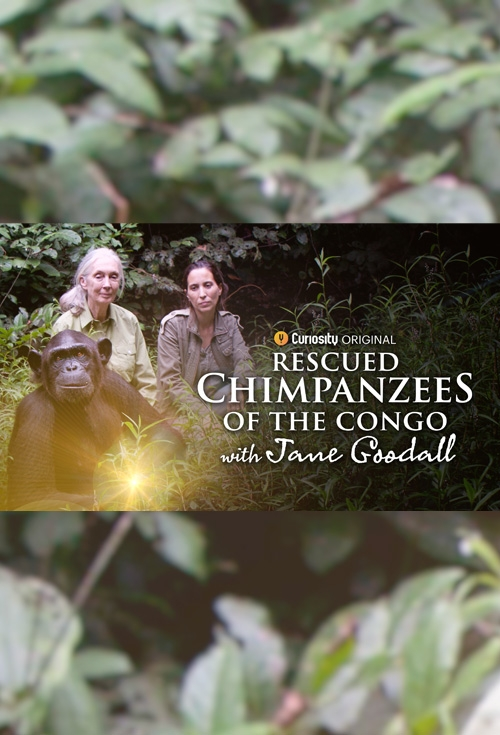Rescued Chimpanzees of the Congo with Jane Goodall ...